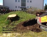 Baumstumpf-Wurzelstock-entfernen-12