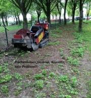 Baumstumpf-Wurzelstock-entfernen-17
