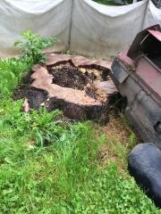Baumstumpf-Wurzelstock-entfernen-30