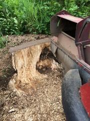 Baumstumpf-Wurzelstock-entfernen-35