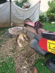 Baumstumpf-Wurzelstock-entfernen-37
