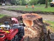 Baumstumpf-Wurzelstock-entfernen-43